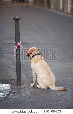 Dog Tied Up To A Post