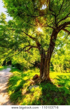 Shining Through Leaves