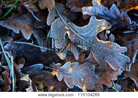Abstract natural background with frozen leafage