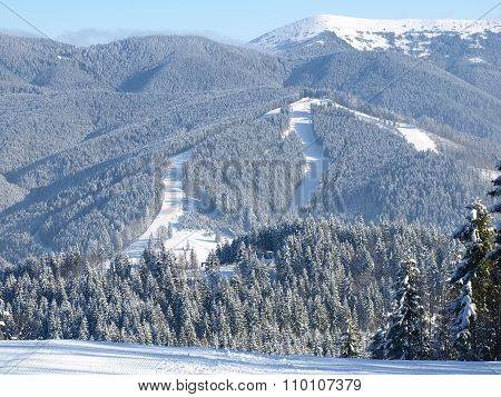 Ski Pistes Among The Spruce Forest In Sunny Day