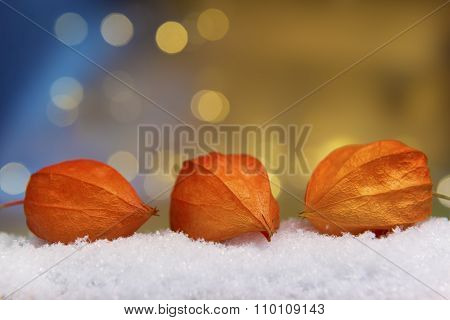 Physalis With Lights