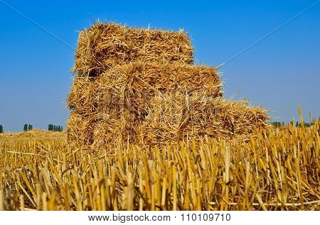 Pressed Bales Of Straw Lying In A Field After Harvest