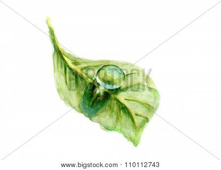 Dew drop on green leaf. Watercolor illustration.
