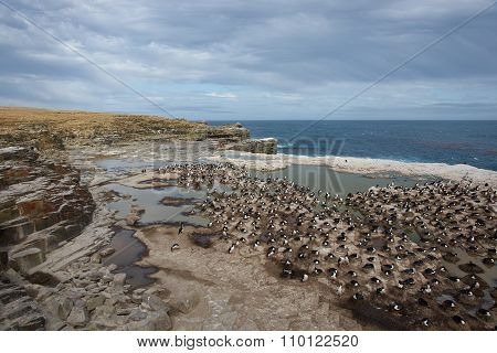 Imperial Shag Colony