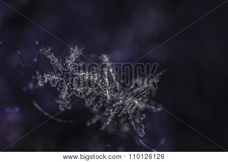Two natural snowflakes crystals on dark hairy glove