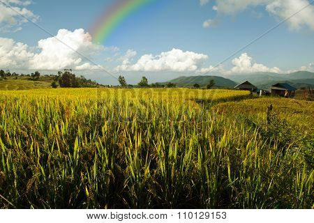 View of rice farm, cloudy sky and rainbow by local people in mountain, northern part of Thailand