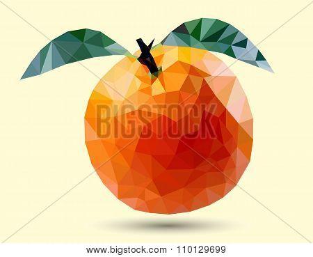 Orange Fruit, Sketch Design