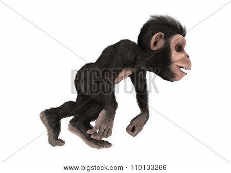 Little Chimp Monkey On White