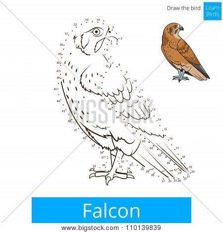 Falcon bird learn birds coloring book vector