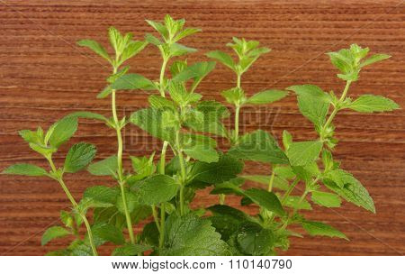 Fresh Healthy Lemon Balm, Wooden Background, Herbalism