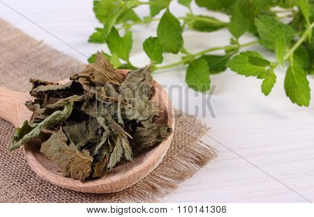 Dried And Fresh Lemon Balm With Spoon On White Wooden Table, Herbalism