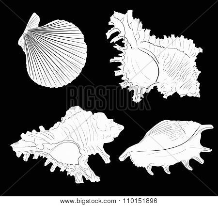 illustration with four white shellfishes sketches isolated on black background