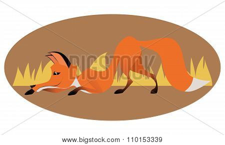 Crouching ?ute sly fox on oval frame