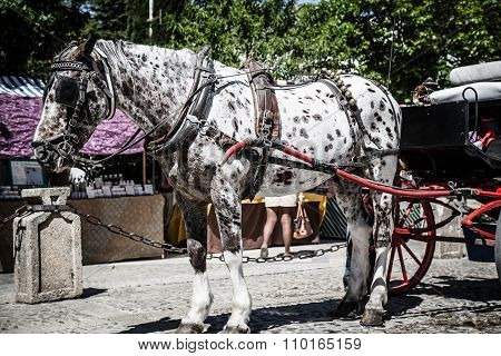 Typical Horse-drawn Carriage In Given Spain's Square, Located In The Parque Maria Luisa,seville, And
