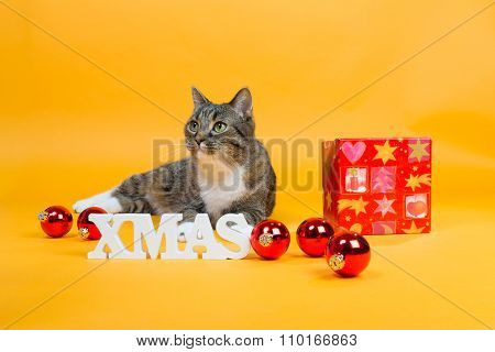 Dream Cats - With Gift Box