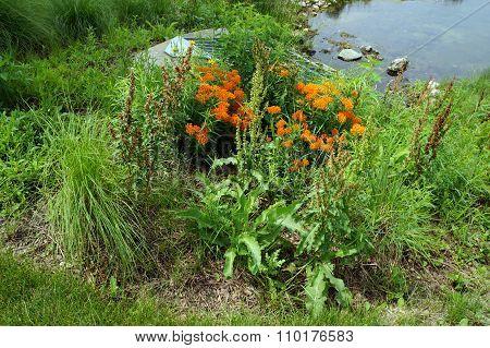 Flowers Beside a Culvert