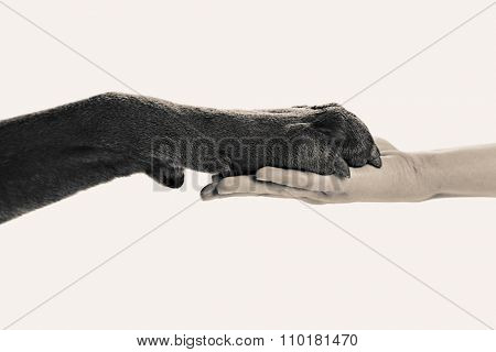 Dog paw and human hand, black and white retro stylization