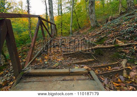 Ladder With A Handrail