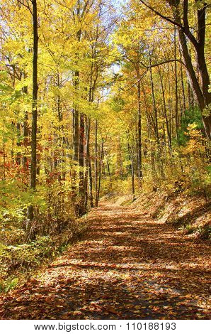 Forest with Path in Fall