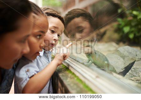 Looking at lizard