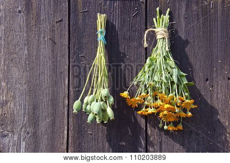Bundles Of Fresh Herbs Hanged To Dry  On A Wooden Wall