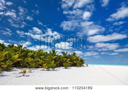 Stunning tropical beach with palm trees, white sand and blue sky at Cook Islands, South Pacific