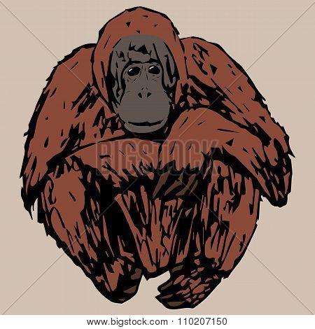 Sedentary Young Orangutan