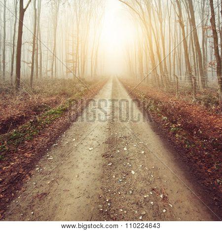 Misty forest path in autumn sun
