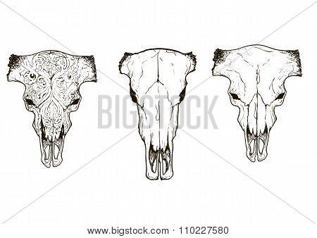 Drawing animal skulls set, vector