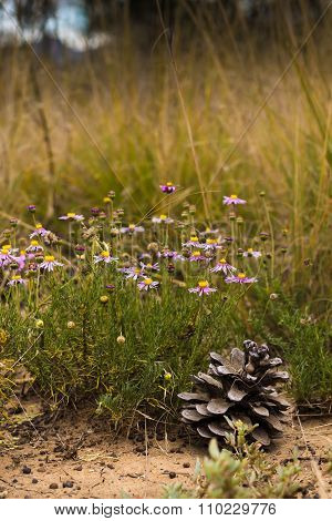 Pink Wild Flowers In A Grassfield In South Africa