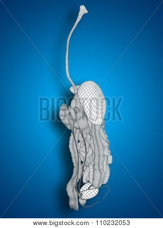 Concept or conceptual anatomical human man 3D wireframe mesh digestive system on blue background