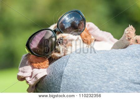 Puppy In Sunglasses