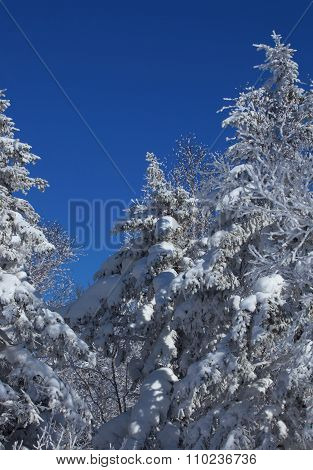 Beautiful Scenic View Of Snowy Trees In The Light Of The Sun