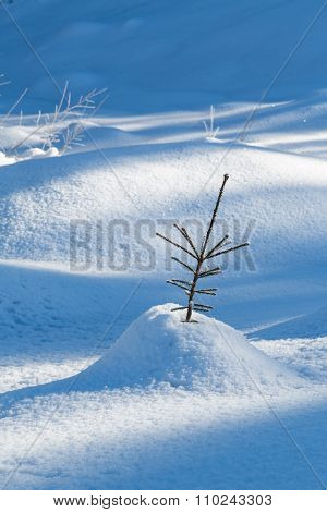 Seedling Fir Tree In The Snow In The Forest