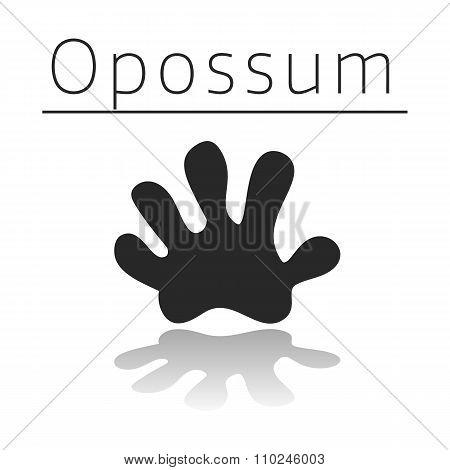 Opossum animal track