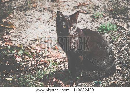 Black Cat On The Ground