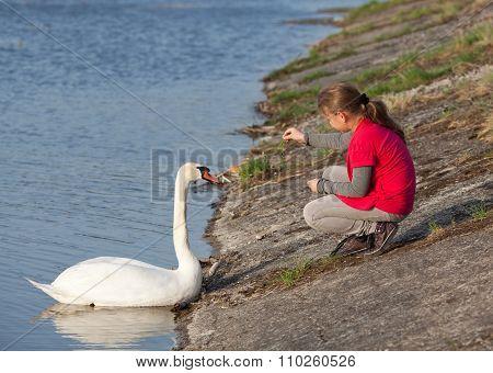 Little Girl Feeding Swan