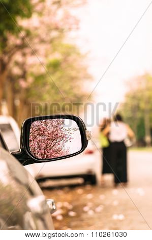 Driving A Car Travel In Flower Road