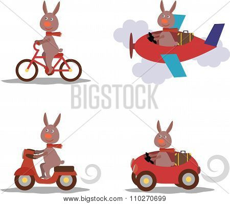 Set - Cute Hare With Scarf On Scooter, Bike, Airplane, Car