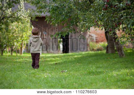 Boy In An Apple Garden