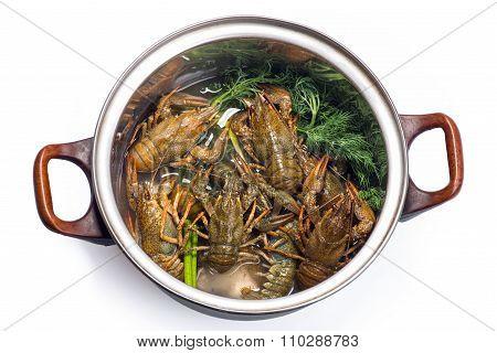 Fresh Crayfish In A Pot