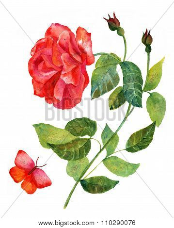 Vintage Watercolor Drawing Of Red Rose With Butterfly, On White backround