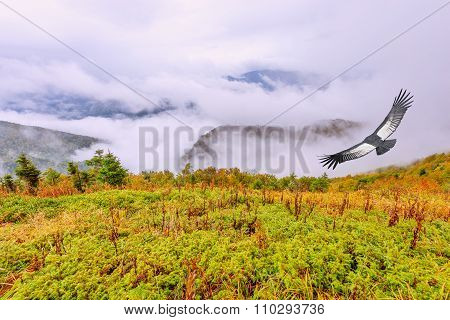 Flight Of The Condor Above The Cloudy Mountain Landscape.