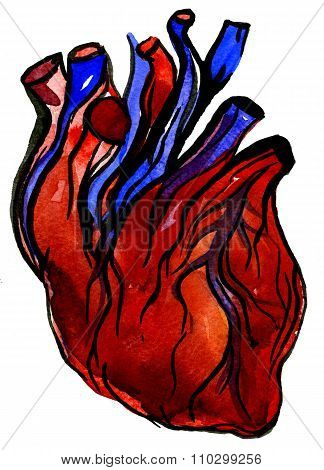 Aquarelle Human Colorful Heart