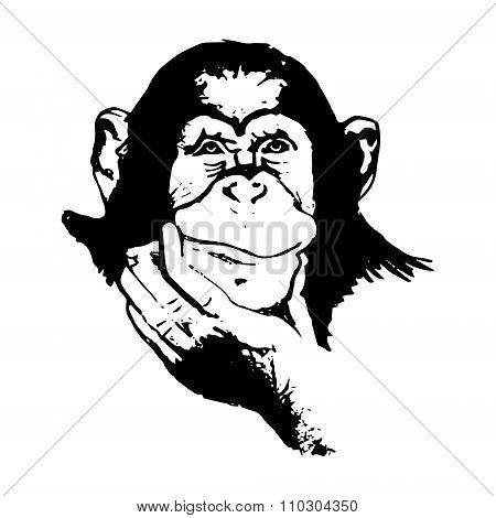 Monkey Head (graphics) - Chimpanzees