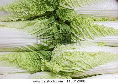Fresh Salad / Fresh Lettuce