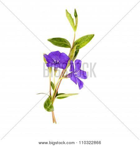 Vinca Spring Bouquet