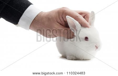 Studio shot of a male hand petting white rabbit isolated on white background.