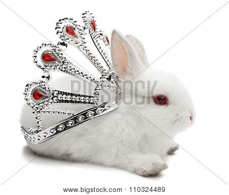 Studio shot of a white baby rabbit wearing crown isolated on white background.