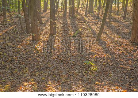 Shadow of trees in the forest